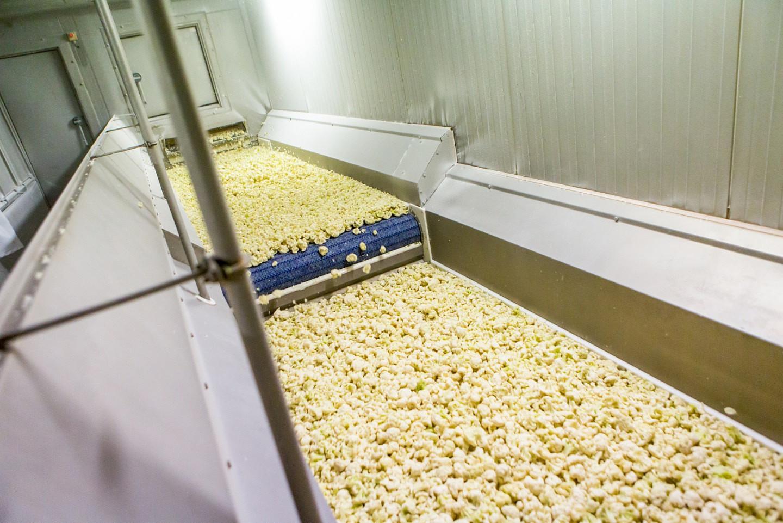 Maszyny do zamrażania owoców, warzyw, owoców morza, mięsa i drobiu - Unidex